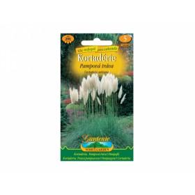 Pampová tráva bílá (Cortaderia selloana)