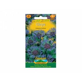 Chrpa modro-fialová - Centaurea montan