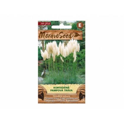 Cortaderia sel/pamp.tráva/bí 30501