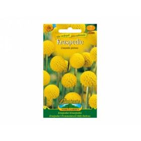Kraspédie žlutá (Craspedia globosa)