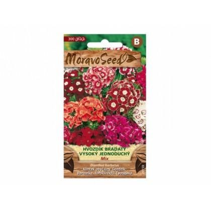 Dianthus barb/hvozd.br/v.je 20159