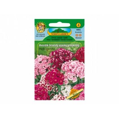 Dianthus barb/hvozd.br/v.pln =