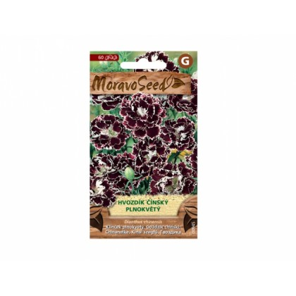 Dianthus ch/hvoz.čí/pl.čr-bí 00945