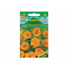 Kuklík chilský Orange