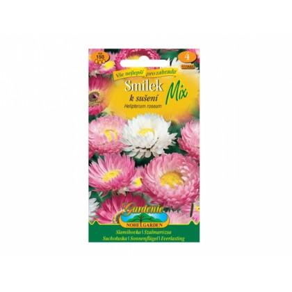 Helipterum ros/smilek/sm
