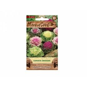 Kapusta okrasná (Brassica oleracea)