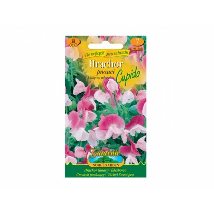 Lathyrus odor/hrachor/pn.rů-bí(Cupido)
