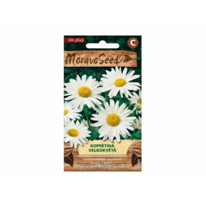 Leucanthemum m/kopretina/ 31480