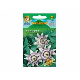 Mučenka pnoucí (Passiflora caerulea) 25 semen