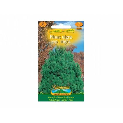 Pinus nigra/borovice černá/