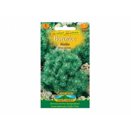 Pinus uncinata/borovice blatka $$$