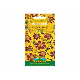 Aksamitník žluto-hnědý