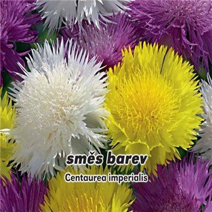 Chrpa císařská - Směs barev - semena 0,6 g