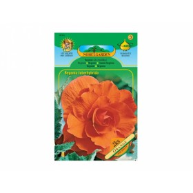 Begonia ORANGE 2ks/VE/jcc