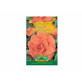 Begonia SALMON 2ks/VE/jdd
