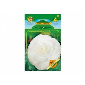 Begonia WHITE 2ks/VE/jcc
