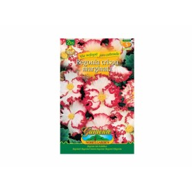 Begonia WHITE/RED 2ks/CR/jdd