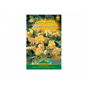 Begonia YELLOW 2ks/PŘ/jdd