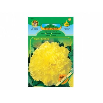 Begonia YELLOW 2ks/TŘ/jcc
