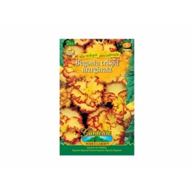 Begonia YELLOW/RED 2ks/CR/jdd
