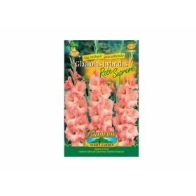 Gladiolus ROSE SUPR.8ks/VEjdd