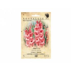 Gladiolus ROSE SUPREME 7ks/VE/joo