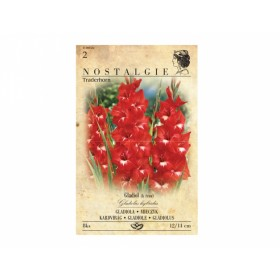 Gladiolus TRADERHORN 8ks/VE/joo