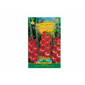 Gladiolus TRADERHORN 8ksVEjdd=