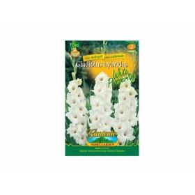 Gladiolus WHITE PR.8ks/VE/jdd