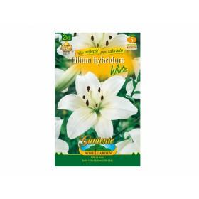 Lilium WHITE 2ks/AS/jpdd