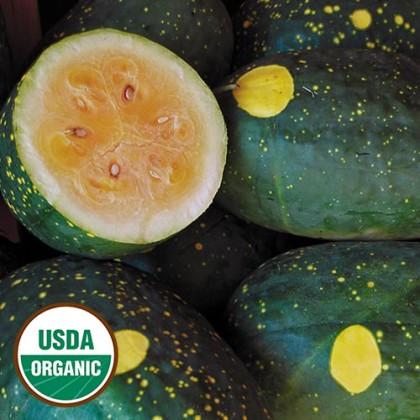 Meloun Moon&Stars - žlutý (Citrullus lanatus ) 10 semen