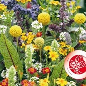 Voňavé květy pro mlsouny