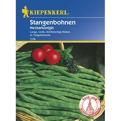 Popínavá fazole Neckarkönigin – semena fazole
