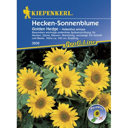 Slunečnice -Helianthus Golden Hedge