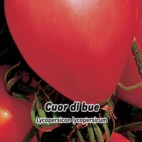Rajče tyčkové: Cuor di blue - semena 0,2 g