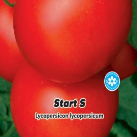 Rajče tyčkové: F1 Start S - semena 0,2 g