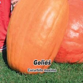 Tykev velkoplodá Goliáš - semena 3 g