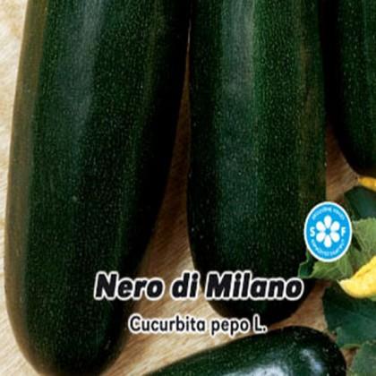 Tykev cuketa Nero di Milano - 1,5g