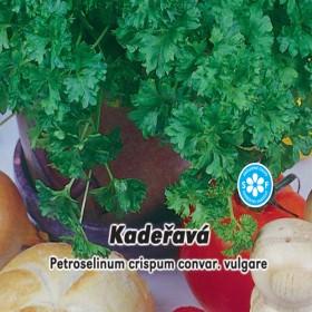 Petržel naťová Kadeřavá - semena 3 g