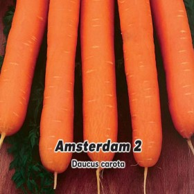Mrkev Amstrdam raná, karotka - semena 3 g