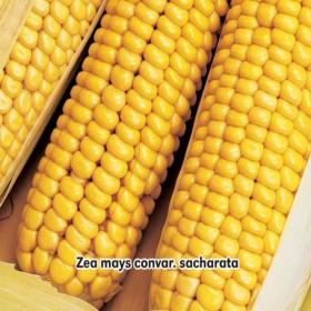 Kukuřice cukrová Golden Bantam 7g semen
