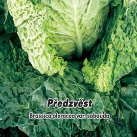 Hlávková Kapusta raná - Předzvěst - semena 0,8 g