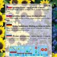 Letničky nízké - Směs druhů a barev - semena 1 g