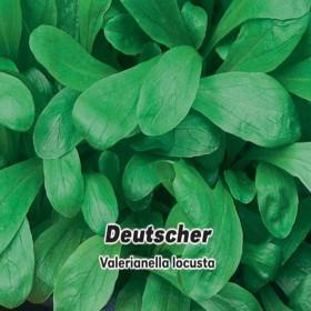 Kozlíček polní - Deutscher - semena 1 g