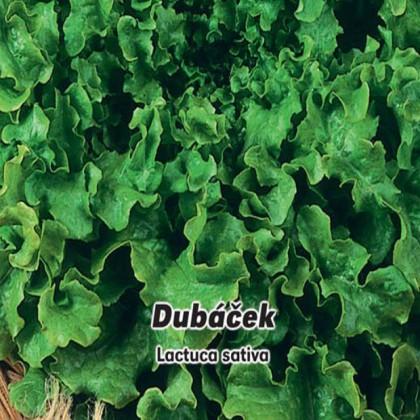 Salát listový Dubáček - semena 0,5 g