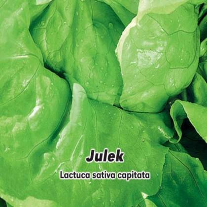 Salát hlávkový letní Julek - semena 0,5 g