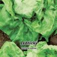 Hlávnkový salát jarní Lednický - 0,5 g