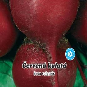 Řepa červená kulatá salátová - semena 4 g