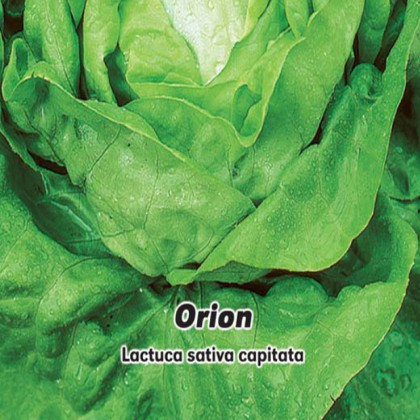 Salát hlávkový jarní Orion - semena 0,5 g
