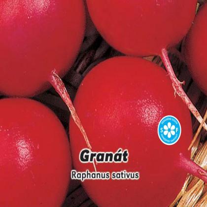 Ředkvička červená - Granát - semena 5 g